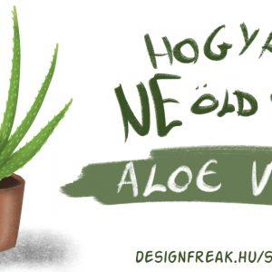 Aloe vera gondozása, vízigénye, fényigénye